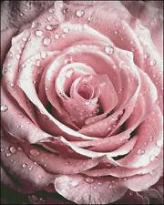 Chart Needlework Craft DIY DMC Counted Cross Stitch Pattern PDF The dew Rose