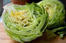 500+ Iceberg Lettuce Seeds- Heirloom Variety