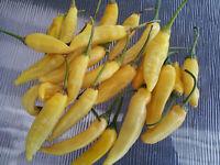 Lemon Drop/Aji Limon Popular Seasoning Chilli Pepper - 10 Seeds