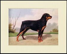 ROTTWEILER LOVELY LITTLE STANDING DOG PRINT MOUNTED READY TO FRAME