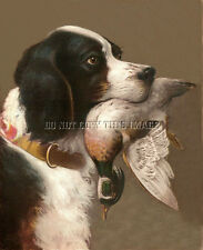 Antique Reproduction Photograph 8X10 Hunting Print English Setter With Wood Duck
