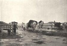 MANCHE. Récolte du Goemon a L'Embouchure Couesnon 1895 old antique print