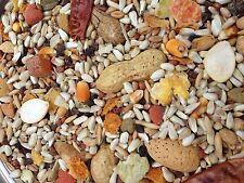 Higgins safflower gold Large Parrot diet bird food nuts fruit seed mix 25lb sale