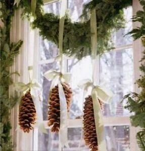 Giant 100% Natural Pine Cones Christmas Decoration Minimum 17 cm long  Craft UK
