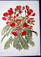 ROYAL POINCIANA FLAME TREE FOREST ~ Floral Botanical Tropical Flower Art Print
