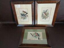 Set Of Three Framed Vintage Bird Prints By Wyman & Sons