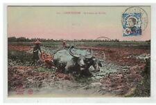TONKIN INDOCHINE VIETNAM SAIGON #18593 COCHINCHINE LE LABOUR EN RIZIERE ATTELAGE