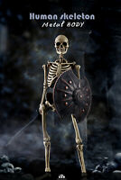 COOMODEL 1/6 NOBS011 The Human Skeleton Body 12'' Movable Figure DIECAST ALLOY