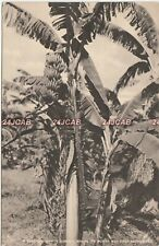 Jamaica Postcard. Bananas where it's worth was first discovered. Feb 15th, 1926