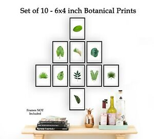 Set of 10 Botanical Plant Prints 6x4 Leaf Fern Print Photo Poster ONLY Ref BPS2