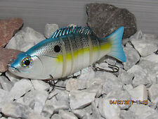 """6"""" hard body swimbait in  Sexy  Shad  color"""