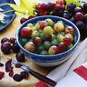 50 Mixed Grape Seeds Vitis Vinifera Delicious Fresh Fruit Bulk Garden Seeds XJ