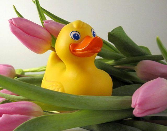 Die-gelbe-Ente