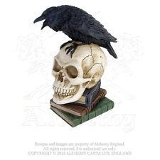 NIB Poes Raven Skull - Crow on Skull on Poetry Books Decor V17 Alchemy Vault Poe