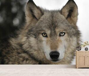 Vlies Tapete XXL Poster Fototapete Wolf