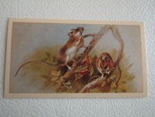 John Player Grandee 1982 ~ British Mammals (I T Ltd) Card Variants (e20)