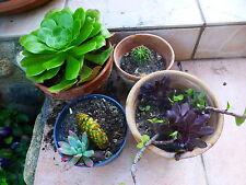 pot de plante variées au choix