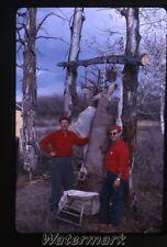 1964  photo slide Deer Hunting Arizona #2