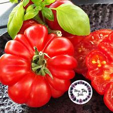 Fleischtomate COSTOLUTO GENOVESE 10 Samen italienische Sorte beliebte Sorte