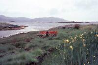 PHOTO  1966 ARISAIG HIGHLAND LOCH NAN CEALL