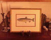 Custom Framed RARE Original 1902 Antique TAHOE TROUT Sherman F Denton Fish Print