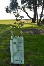 Tree and Plant Guards (Aust Made) GREEN 10 pieces Inc 10 Stakes and ties