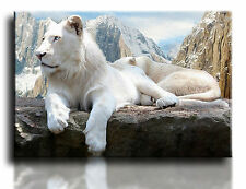 "Large Wall Art Canvas Picture Print of White Lion Framed 20""x30"""