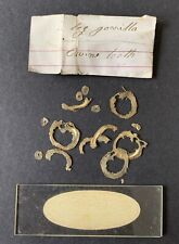 Antique Microscope Slide Specimen Packet C1870. Gorilla Bone & Swine Tooth