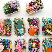 Real Dried Flowers Plants Pressed For Resin Jewellery Making Craft DIY Access YK