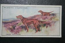 Irish Setter  Red Setter     Original 1920's  Vintage Card  VGC