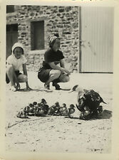 PHOTO ANCIENNE - VINTAGE SNAPSHOT - OISEAUX CANARD FAMILLE DRÔLE - DUCK FUNNY
