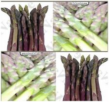 (30) ARGENTEUIL PURPLE Asparagus Seeds - A+ French HEIRLOOM - Combined S&H