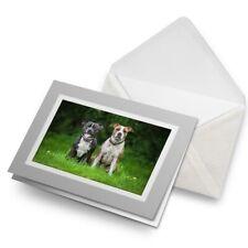 Tarjeta De Saludos (Gris) - Inglés Americano Staffordshire Perros #12372