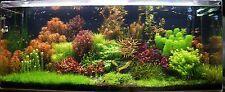 40 VALUE live tropical aquarium plants - range of species & colour for fish tank