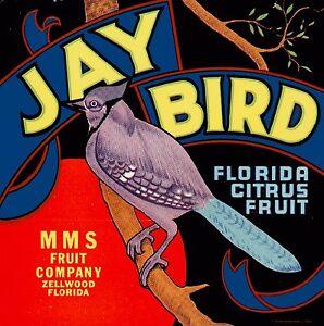 Zellwood Florida Jay Bird Orange Citrus Fruit Crate Label Print