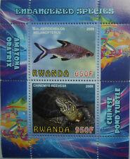 Endangered species bala tricolor shark, turtle s/s Rwanda 2009 MNH #F136