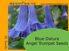 Datura Angel Trumpets (Red,Yellow,Blue,Pink,Purple,White,Black) Seeds -10 Seeds