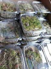 Reptile moss live bio active spagnum BUY ONE GET ONE FREE + FREE SHIPPING!!!!!