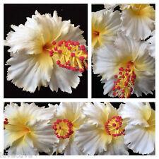 """5"""" Hawaiian Foam Hibiscus Flower Hair PICK Aloha White"""