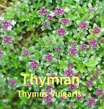 ***Thymianöl, natürlich (Thymus vulgaris) 30ml,  Spanien  Topp!!