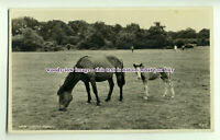 an0196 - New Forest Ponies Grazing in the Countryside c1958 - postcard