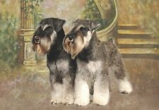 Miniature Schnauzer A6 Blank Card No 11 By Starprint - Auto combined postage