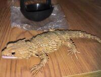 Dangomushi 07 Roly-poly &  Armadillo lizard (5. Rare Inking ver.) Capsule Toy JP