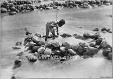 "Photo 1899 Australia ""Aborigine Fisherman - Stick & Rock Pool Trap"""