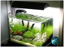 Xmas moss -for live fish fern aquarium plant co2 AM