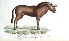 Ñus GNU Bechstein mano Color Antiguo impresión de Historia Natural 1796