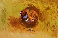 """high quality oil painting handpainted on canvas """"cock pheasant"""""""