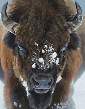 Winter Warrior by Terry Isaac Art Print - Bison Wildlife Buffalo Poster 22x28
