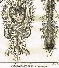 Diderot's Enclyclopedie - ANATOMIE, NEUROLOGIE  (NEUROLOGY) - Engraving - c1750
