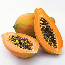 Maradol Papaya Seeds Home Garden 8Pcs Vegetable Fruit Tree Plants Seeds Outdoor